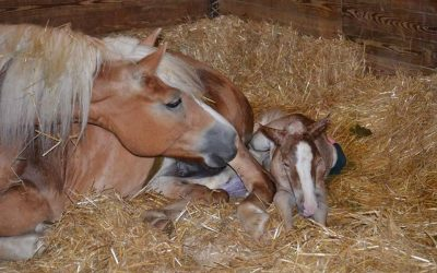 Myriam GHJ has First Foal